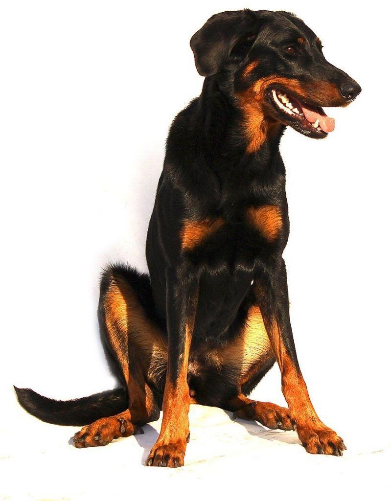 Hundversicherung